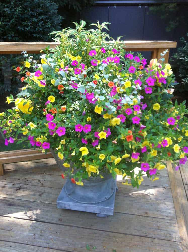 container flower planting
